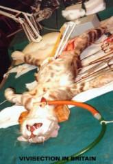 vivisectionl.jpg