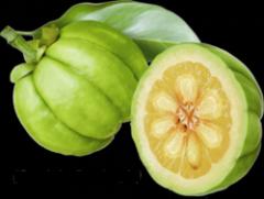 garcinia-cambogia-fruit.png