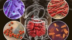 microbiote.jpg
