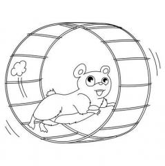 hamster_roue_epf_fr.jpg