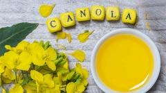 canola-oil-health-effects-fr-saag.jpg